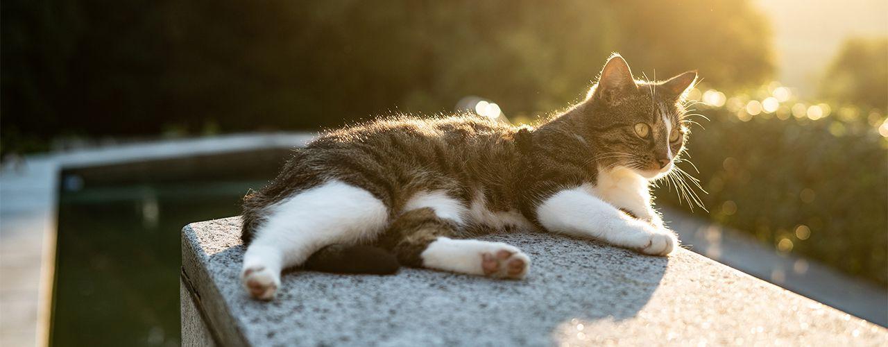 Katzen schlafmittel für Katze miaut
